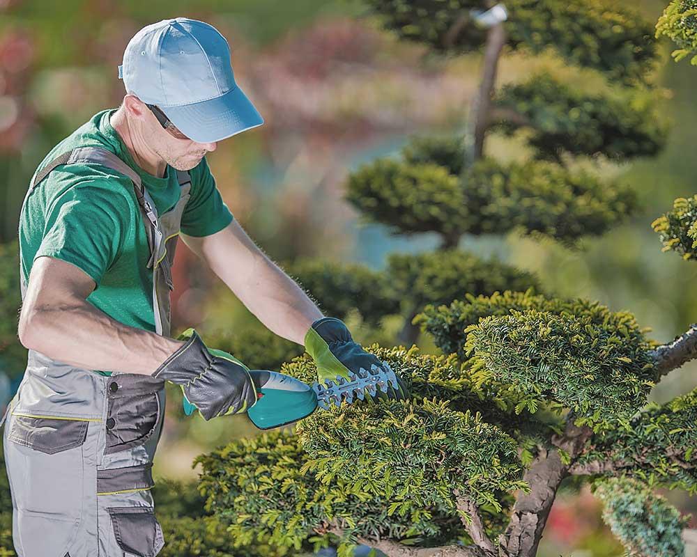 Webseiten für das Handwerk – Gartenbau.